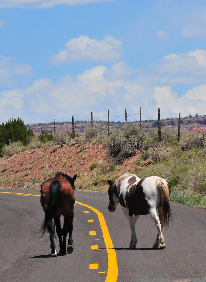 Southwest Landscape with Horses. Grazing along the roadside. Chestnut colored horse with black mane and tail and pinto pony companion. Native American stock images