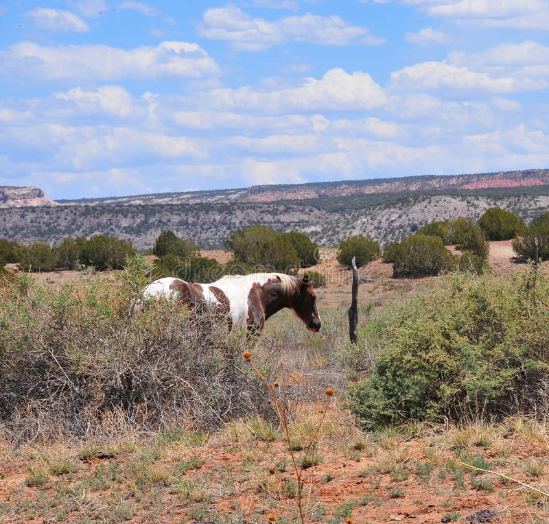 Southwest Landscape with Horses. Grazing along the roadside. Pinto Pony. Native American. Southwestern scenery. Barbed wire fence posts. Mesa in the distance royalty free stock photos