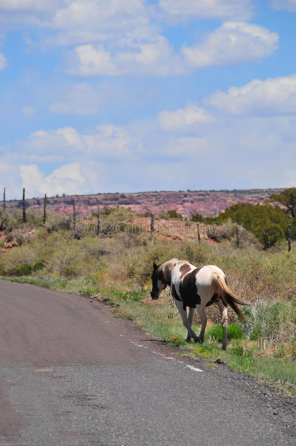 Southwest Landscape with Horses. Grazing along the roadside. Pinto Pony. Native American. Southwestern scenery. Barbed wire fence posts. Mesa in the distance royalty free stock image