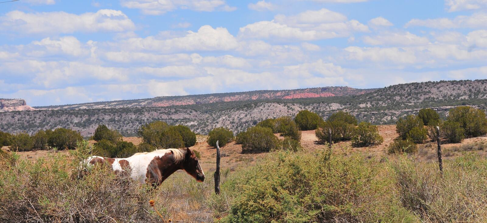 Southwest Landscape with Horses. Grazing along the roadside. Pinto Pony. Native American. Southwestern scenery. Barbed wire fence posts. Mesa in the distance stock photos