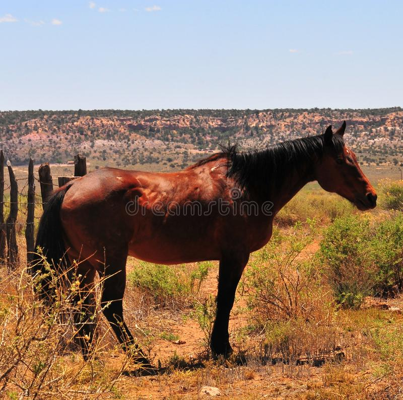 Southwest Landscape with Horses. Grazing along the roadside. Chestnut colored horse with black mane and tail. Native American. Southwestern scenery. Barbed wire royalty free stock photo