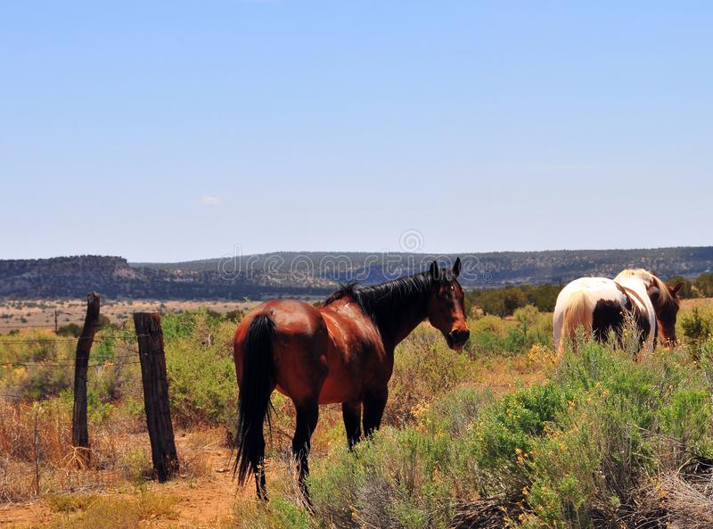 Southwest Landscape with Horses. Grazing along the roadside. Chestnut colored horse with black mane and tail and pinto pony companion. Native American stock photography