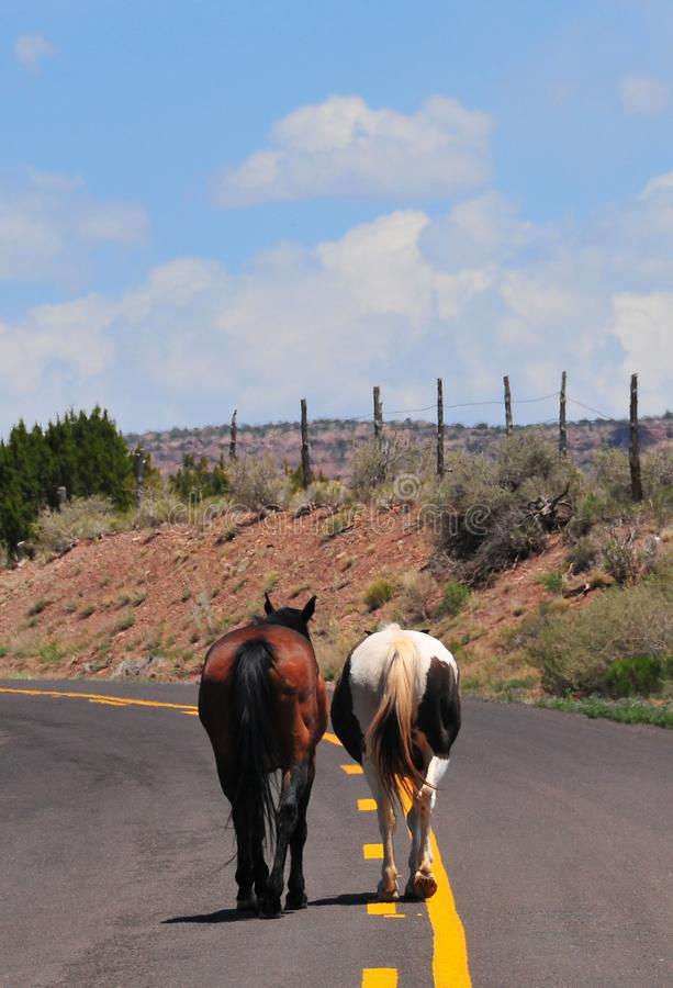 Southwest Landscape with Horses. Grazing along the roadside. Chestnut colored horse with black mane and tail and pinto pony companion. Native American stock photos