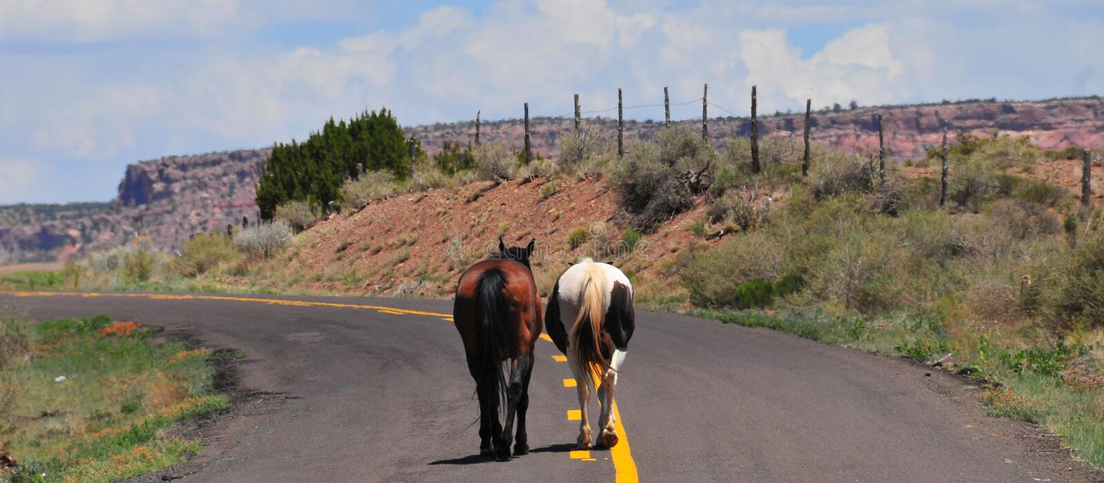 Southwest Landscape with Horses. Grazing along the roadside. Chestnut colored horse with black mane and tail and pinto pony companion. Native American royalty free stock photo