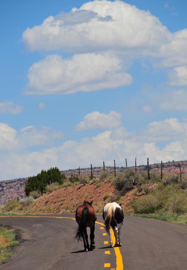 Southwest Landscape with Horses. Grazing along the roadside. Chestnut colored horse with black mane and tail and pinto pony companion. Native American stock image