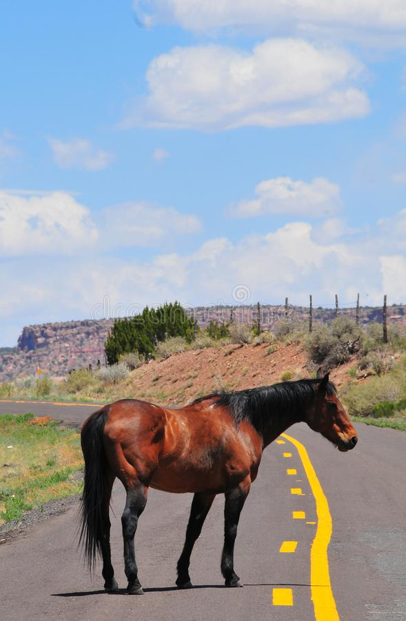 Southwest Landscape with Horses. Grazing along the roadside. Chestnut colored horse with black mane and tail. Native American. Southwestern scenery. Barbed wire royalty free stock images