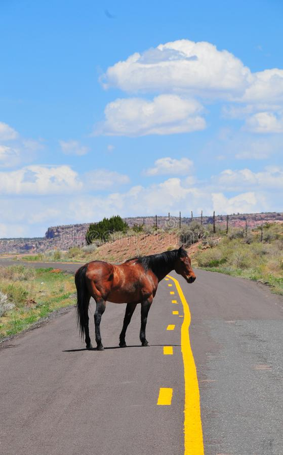 Southwest Landscape with Horses. Grazing along the roadside. Chestnut colored horse with black mane and tail. Native American. Southwestern scenery. Barbed wire stock photo