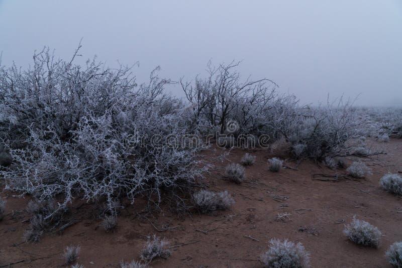 Southwest New Mexico desert winter fog. A foggy winter morning in the desert southwest of New Mexico stock photos