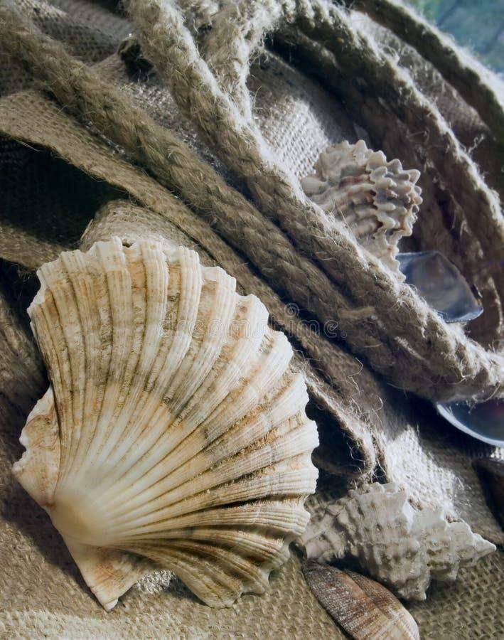 Download Souvenirs d'été photo stock. Image du textures, aquatique - 731976