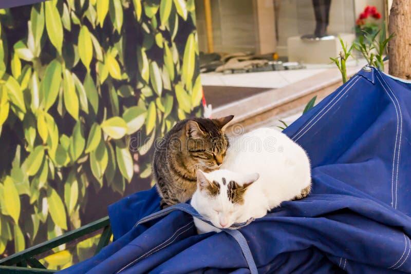 sova för katter arkivfoto