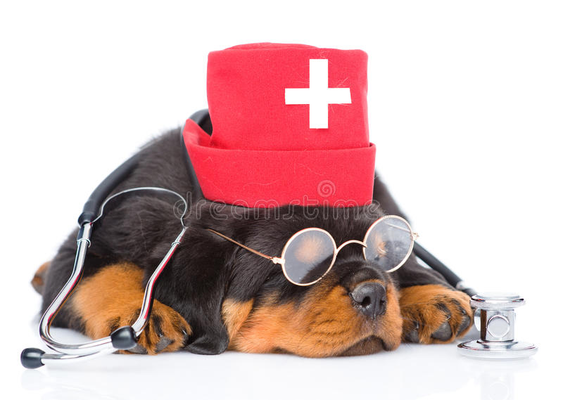 Sova hatten för läkarundersökning för sjuksköterskor för rottweilervalphund den bärande isolerat royaltyfria foton