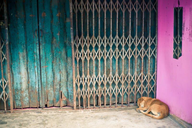 Sova hund royaltyfria bilder