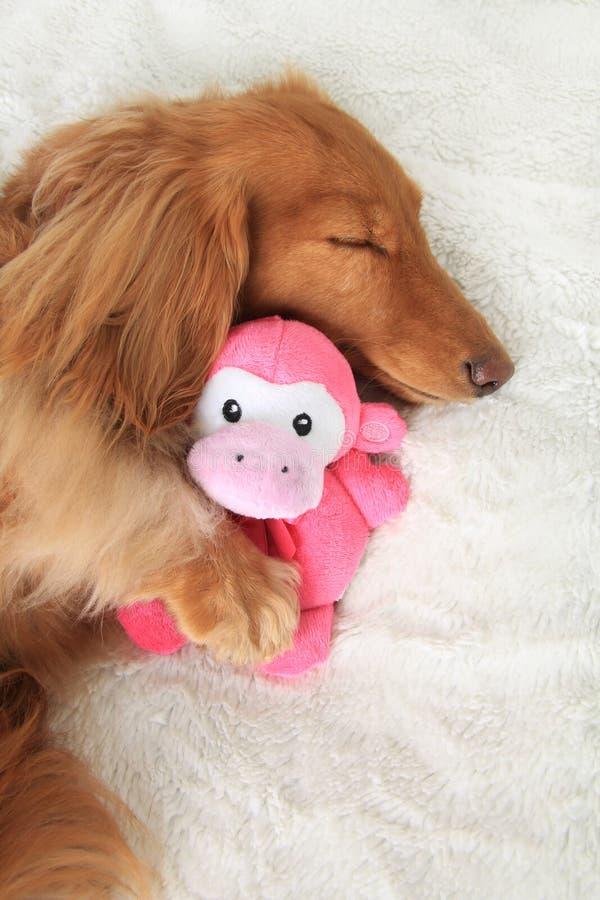 Sova hunden royaltyfria foton