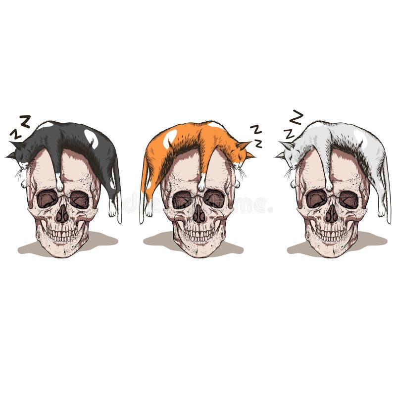 Sova katt royaltyfri illustrationer