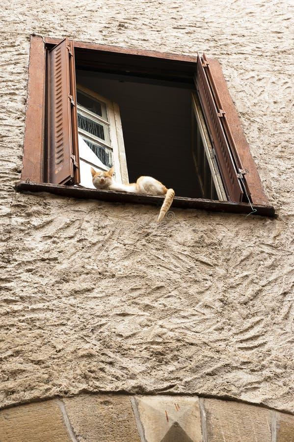 Sova katt i fönster royaltyfri fotografi