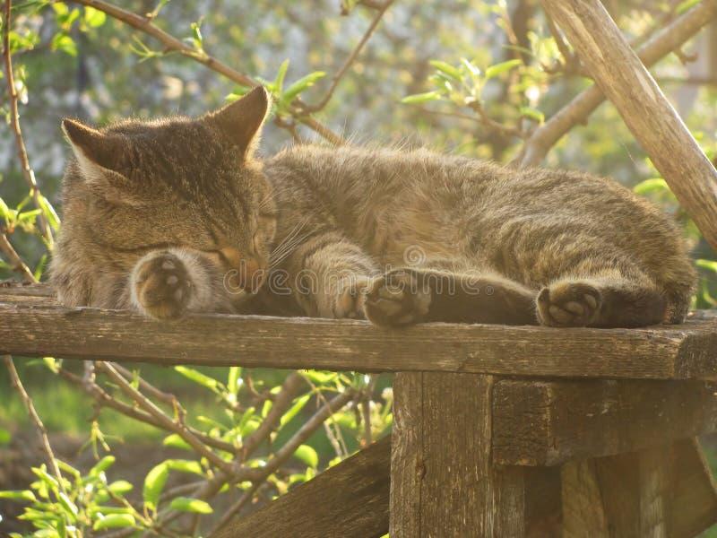 Sova katt i trädgården. arkivbild