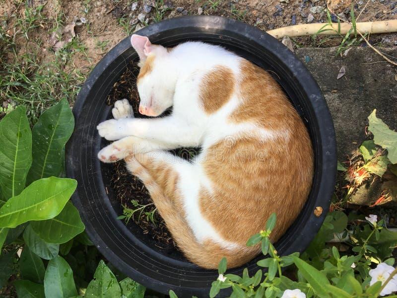 Sova katten i svart blomkruka arkivbild