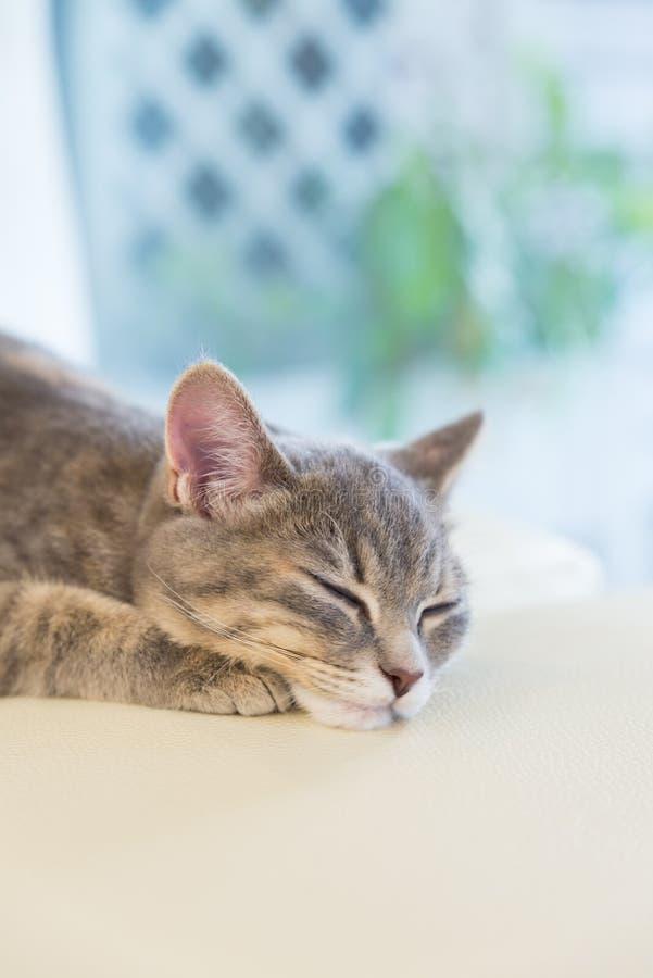 Sova katten på studiostol royaltyfri foto