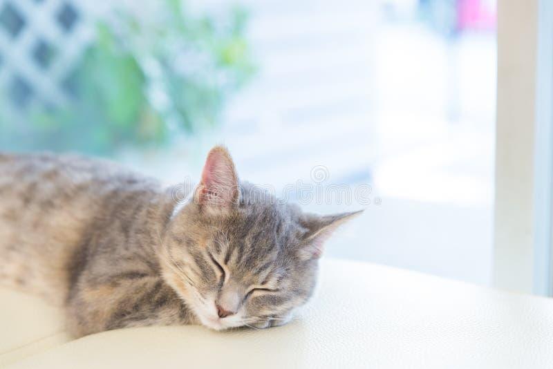 Sova katten på studiostol arkivbilder