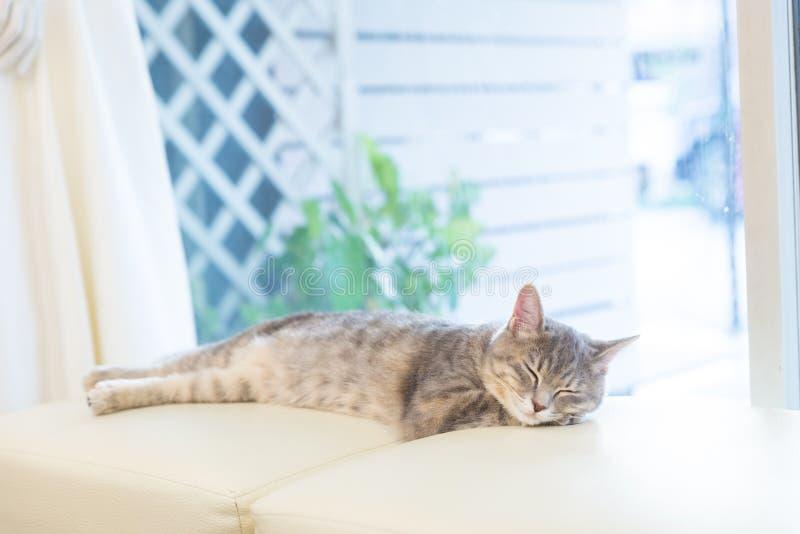 Sova katten på studiostol royaltyfria foton