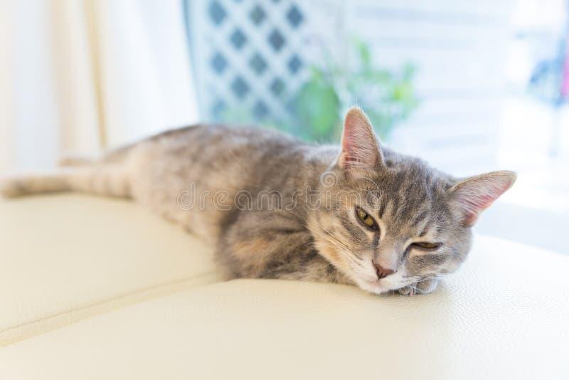 Sova katten på studiostol royaltyfri bild