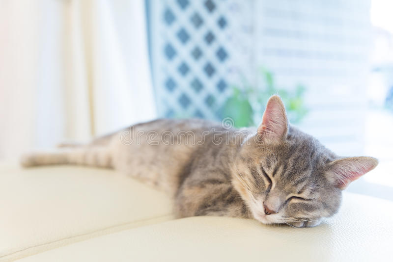 Sova katten på studiostol arkivbild