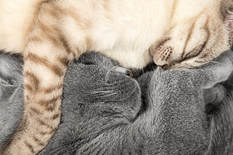 Sova katter arkivbild