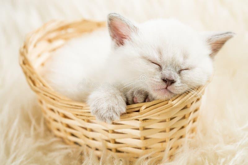 Sova kattunge royaltyfri bild