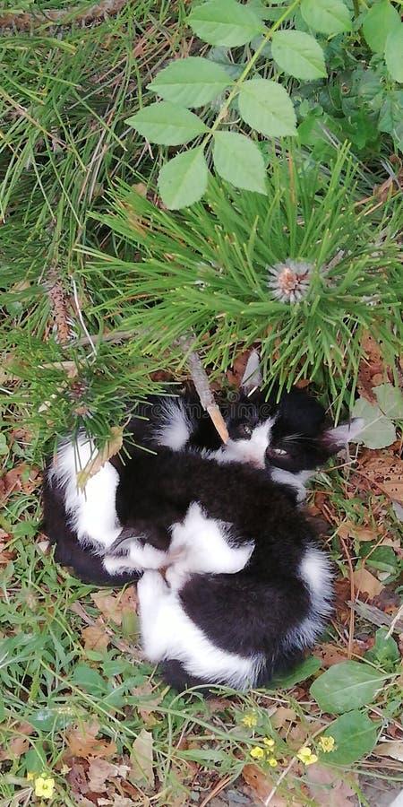 Sova kattunge två på en bakgrund av grönt gräs och lövverk Gullig försiktig rörande bakgrund arkivbilder