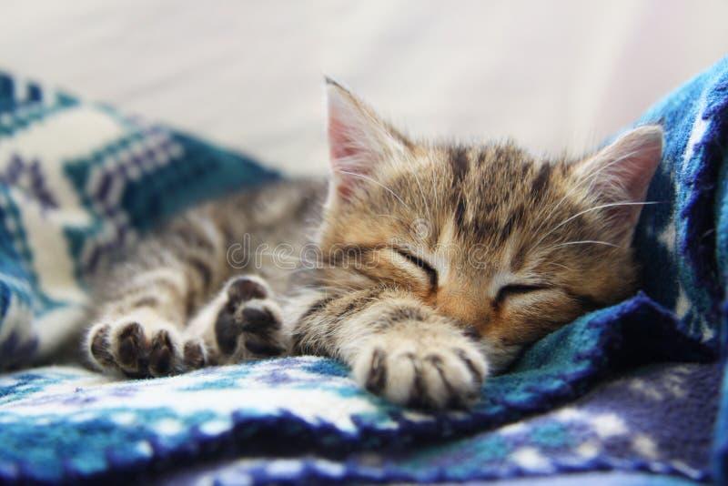 Sova kattungen royaltyfria foton