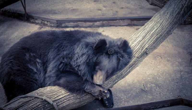 sova white för bakgrundsbjörn royaltyfri fotografi