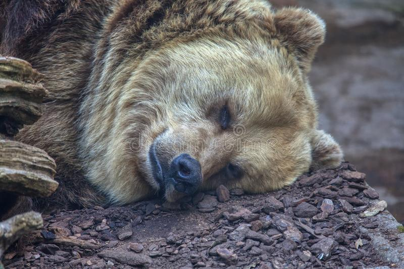 sova white för bakgrundsbjörn royaltyfria bilder