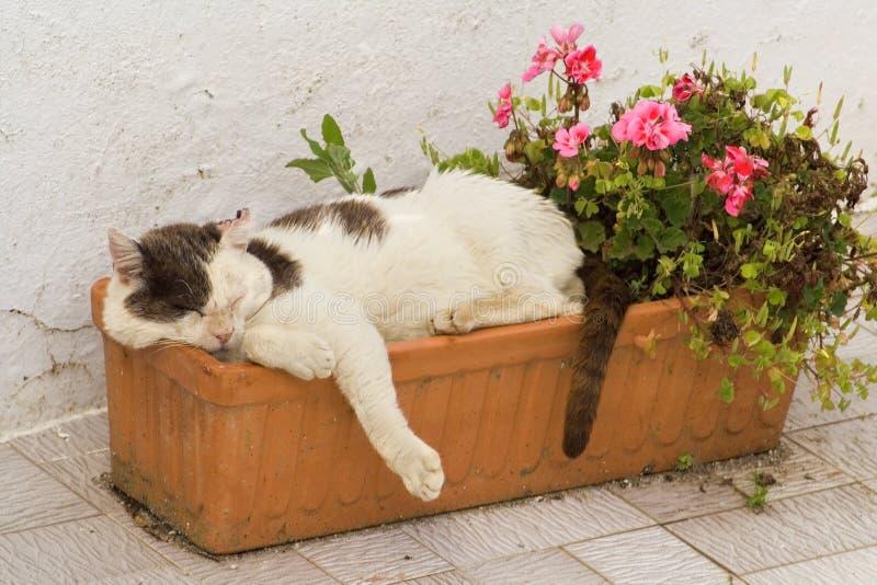 sovande katt royaltyfria foton