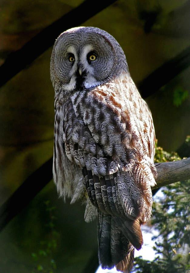 Download Sowa zdjęcie stock. Obraz złożonej z ptak, sowa, fauny - 128424