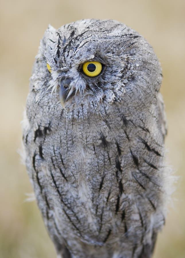 Download Sowa obraz stock. Obraz złożonej z ptak, sowa, migreny - 6920473