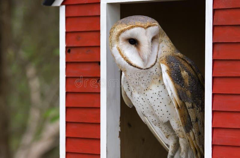 sowa barn fotografia royalty free