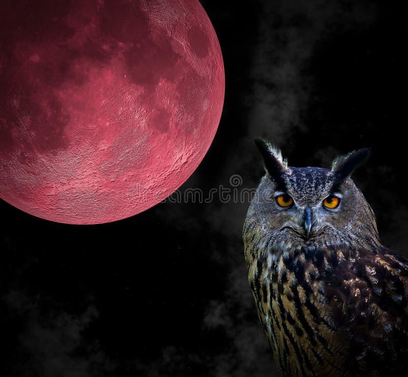 Sowa i księżyc obraz stock