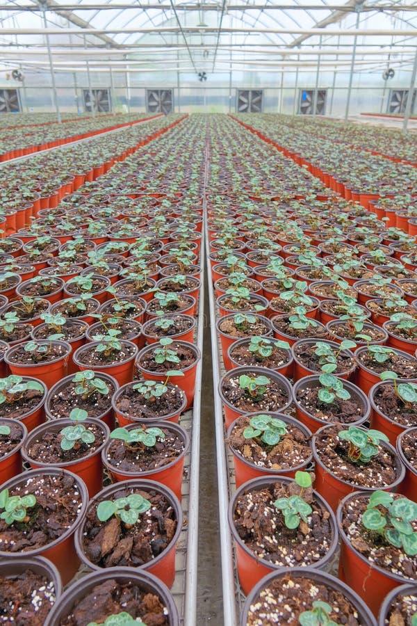 Nursery Greenhouse stock photography