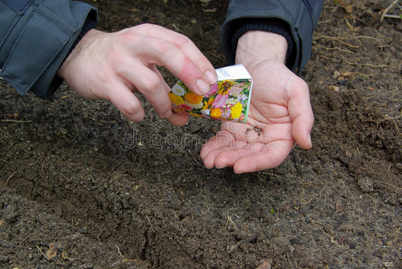 Sowing. Gardening in early spring royalty free stock image