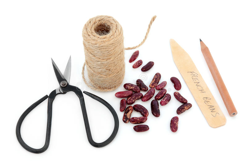Sowing French Bean Seeds. French bean seed sowing equipment of string, pencil, wooden labels and scissors over white background royalty free stock photos