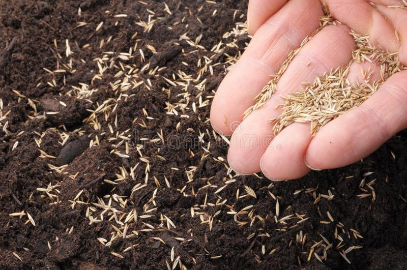 Sowing hand. And soil showing growth or agriculture concept stock photos