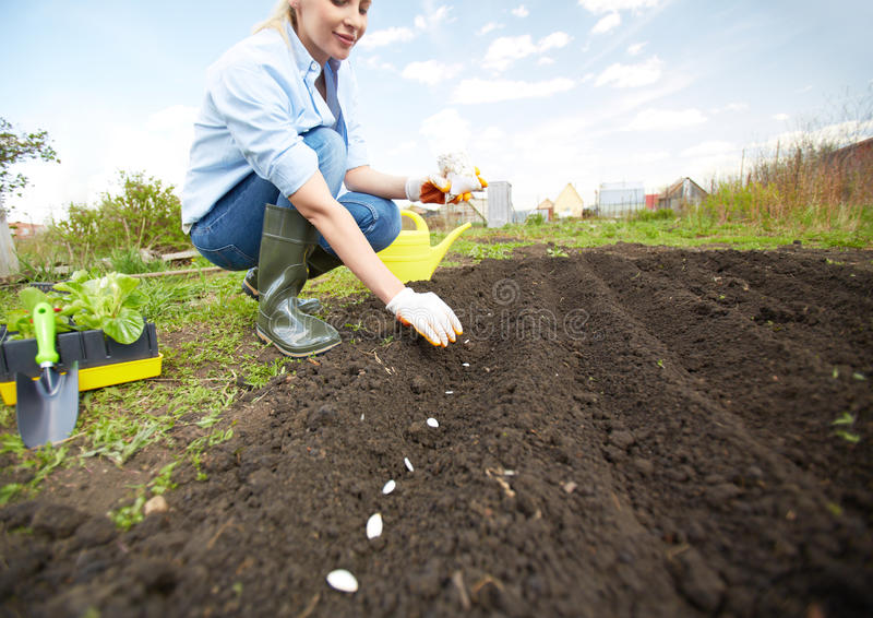 Sowing seed. Image of female farmer sowing seed in the garden royalty free stock image