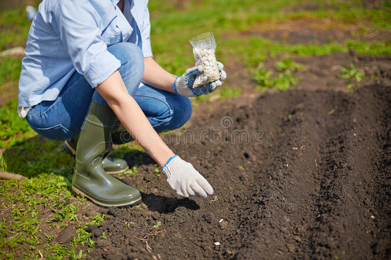 Sowing seed. Image of female farmer sowing seed in the garden royalty free stock photo