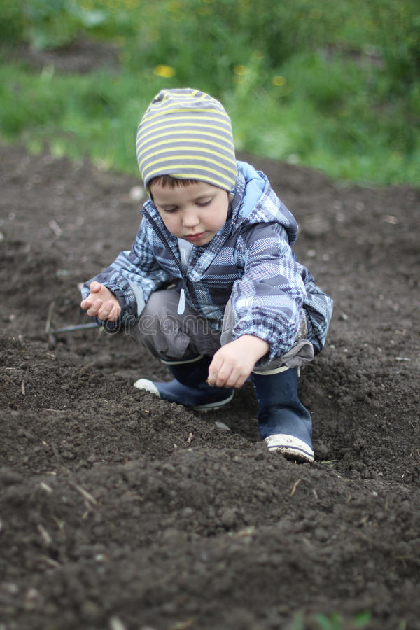 Sowing seeds. A young boy sowing seeds in spring royalty free stock photography