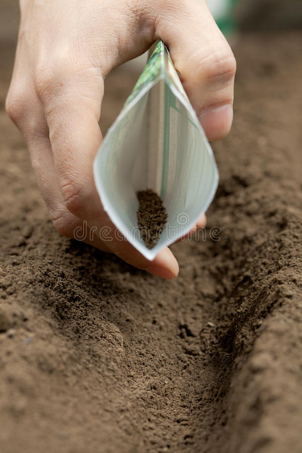Sowing seeds. In spring - agricultural royalty free stock image