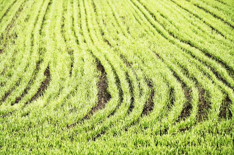 Download Sown field stock image. Image of ground, countryside - 24814427