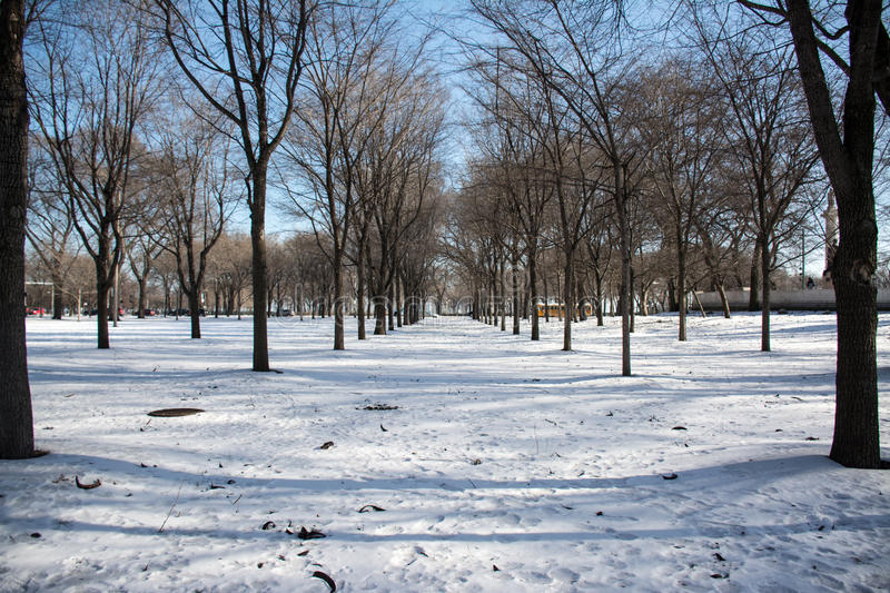Sowy Day at Grant Park, Chicago IL royalty free stock photography
