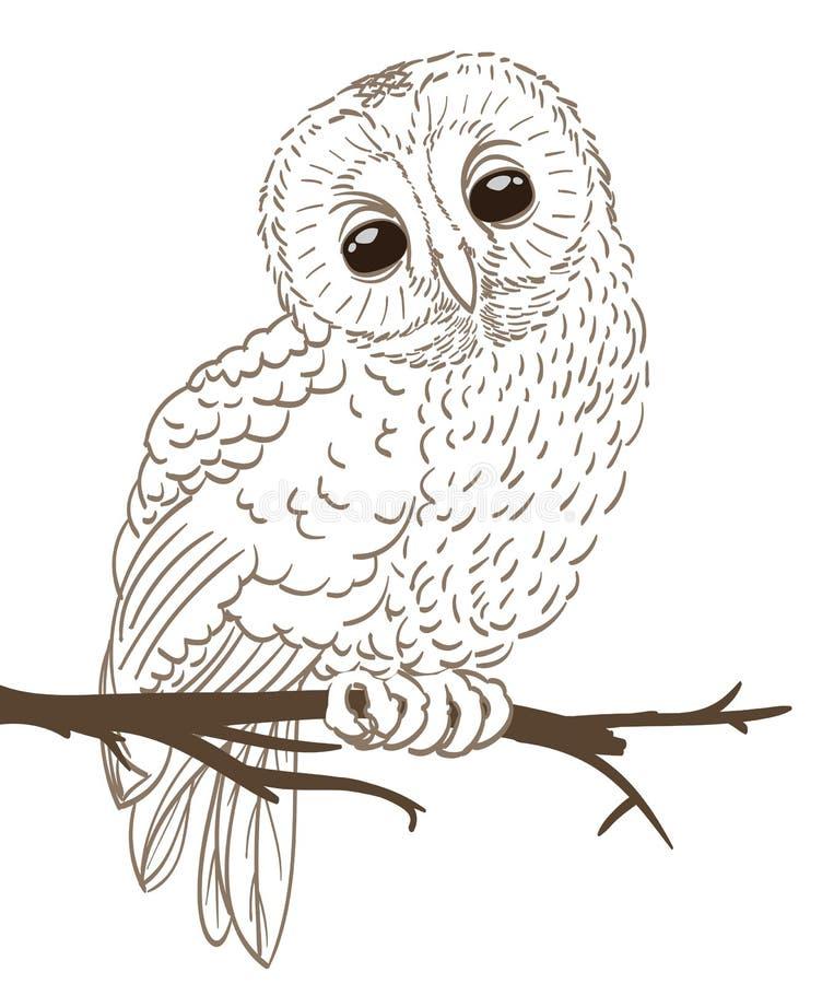 Sowy obsiadanie na gałązce ilustracja wektor