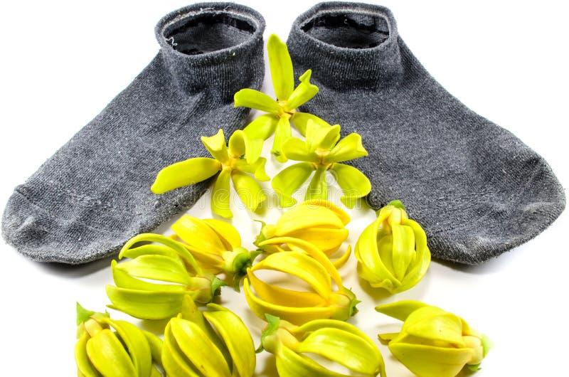 Sox e fiori fotografie stock