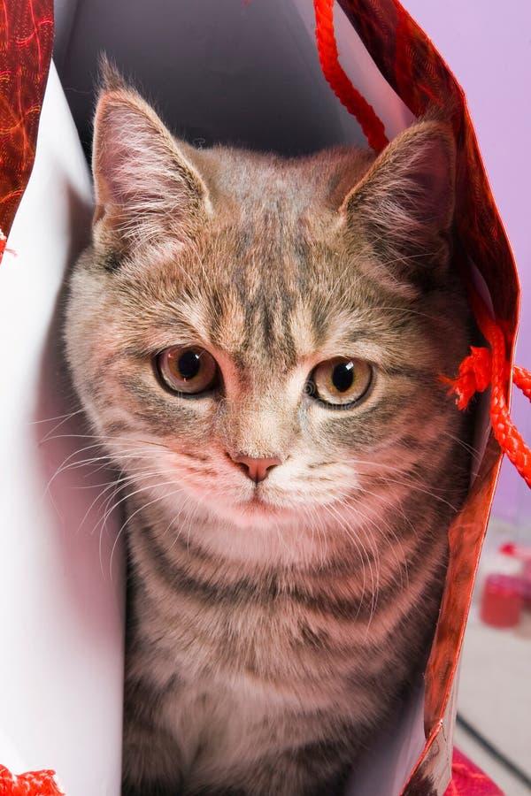Download Soy su presente foto de archivo. Imagen de doméstico, animales - 7283858